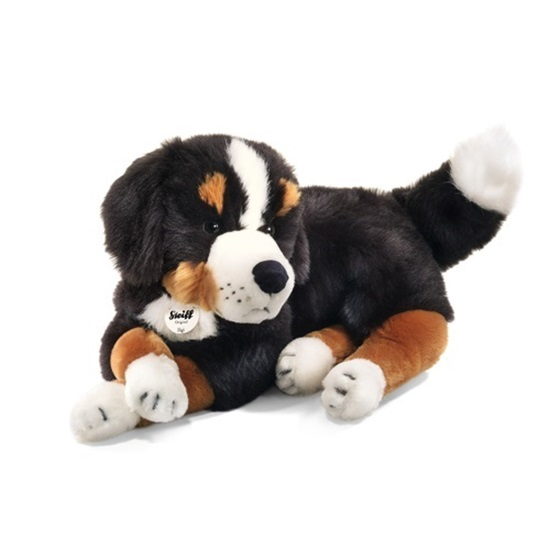 Picture of Siggi Bernese Mountain Dog