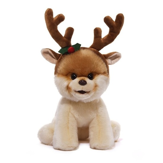 Picture of Boo - The World's Cutest Dog - Reindeer Antlers